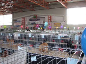 Expozitia nationala 29-31 ianuarie 2010 Breaza
