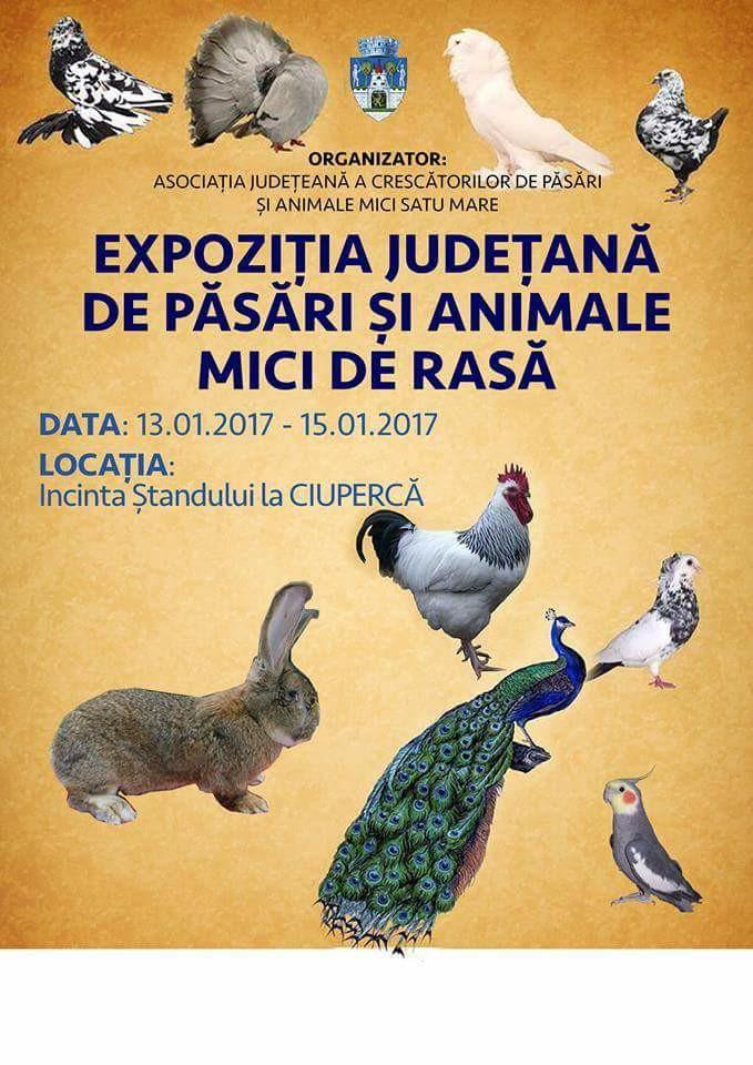 afis-expo-satu-mare-2017
